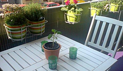Meine Tomatenpflanze Thorsten Mitte April