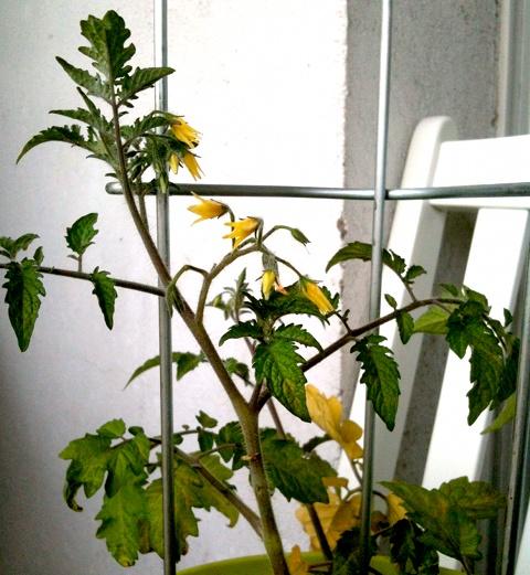 Thorsten Zwo, mit Blüten