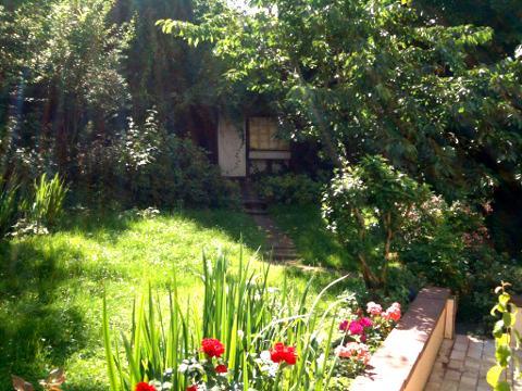 Mein neuer, wilder Garten